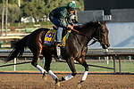 ARCADIA, CA  OCTOBER 30: Breeders' Cup Classic entrant Elate, trained by William I. Mott,  exercises in preparation for the Breeders' Cup World Championships at Santa Anita Park in Arcadia, California on October 30, 2019. (Photo by Casey Phillips/Eclipse Sportswire/CSM)