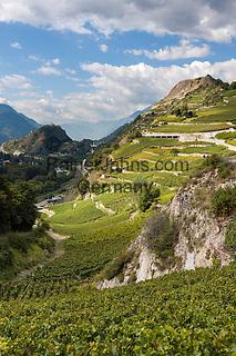 Switzerland, Canton Valais, Sion: wine growing in Rhône Valley   Schweiz, Kanton Wallis, Sion (Sitten): Weinanbau im Rhonetal