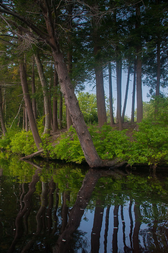 Trees Reflecting in Lake, Hamilton Reservoir, Holland, Massachusetts, US
