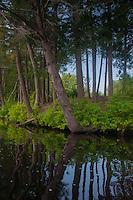 Trees Reflecting in Lake, Hamilton Reservoir, Holland, Massachusetts, US
