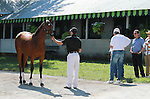 September 08, 2014:Hip #306 Tiznow - Supercharger colt being shown to hall of fame trainer D. Wayne Lukas and clients at the Keeneland September Yearling Sale.  Consigned by Hill 'n' Dale sales and scheduled to sale on Tuesday, the colt is a half brother to Kentucky Derby winner and hot young sire, Super Saver.   Candice Chavez/ESW/CSM