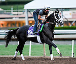 Tom's Ready, owned by GMB Racing, LLC and trained by Dallas Stewart, exercises in preparation for the Breeders' Cup Las Vegas Dirt Mile