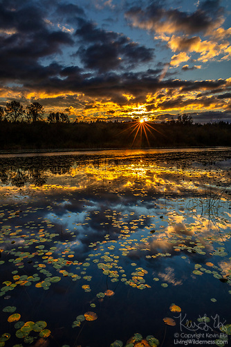 Sunset Over Autumn Lily Pads, Lake Sammamish, Redmond, Washington