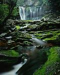 Blackwater Falls State Park, WV: Elakala Falls on Shay Run flowing into Blackwater Gorge