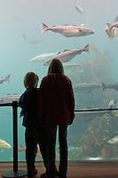 Besucher in Meeresaquarium, marines Aquarium mit Meeresfischen, Kinder blicken in riesiges Becken mit großen Fischen, Schauaquarium, Alesund, Norwegen