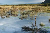 Safari in Massai Mara Kenya
