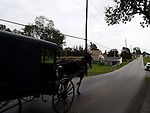PENNSYLVANIA AMISH MAN DRIVING HORSE & BUGGY