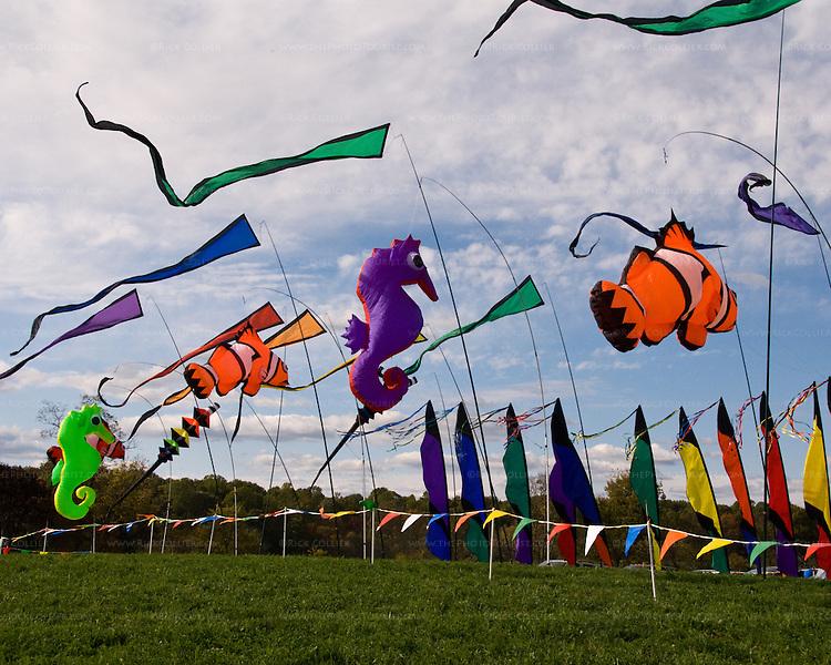 Flags decorate the entrance to the annual balloon festival at Long Branch Farm, Winchester, Virginia, USA.  © RickCollier