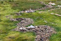 Plastic litter washed up on salt marsh grass.