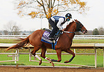 Cowan, trained by trainer Steven M. Asmussen, exercises in preparation for the Breeders' Cup Juvenile Turf Sprint at Keeneland Racetrack in Lexington, Kentucky on November 1, 2020. /CSM
