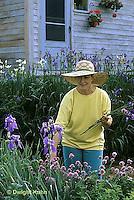HB05-161x  English Cottage Garden - picking flowers - bearded iris - Iris spp.
