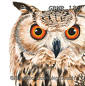 Simon, REALISTIC ANIMALS, REALISTISCHE TIERE, ANIMALES REALISTICOS, paintings+++++Card_OliviaH_EagleOwl,GBWR126,#a#, EVERYDAY,owl