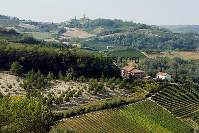 Italien, Piemont, Weinanbau bei Acqui Terme| Italy, Piedmont, vineyards near Acqui Terme
