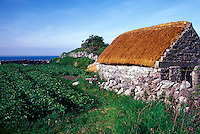 Planted field and thatched farm shed, County Kerry, Ireland