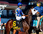 OZONE PARK, NY - JANUARY 30: Adventist #6 with Kendick, Carmonouche in post parade on Withers Stakes Day at Aqueduct Race Track in Ozone Park, New York on January 30, 2016. (Photo by Sue Kawczynski)