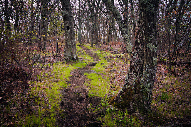 Spring awakens to lead the way along the trail, Appalachian Trail, The Priest Wilderness Area