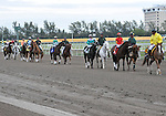 30 January 2009: Winning horse Capt. Candyman Can (no. 3) in the post parade before the 53rd running of the Grade 2 Hutcheson Stakes for three-year-olds at Gulfstream Park in Hallandale, Florida.