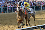 In Lingerie (no. 7), ridden by John Velazquez and trained by Todd Pletcher, wins the 88th running of grade 2 Black-Eyed Susan Stakes for three year old fillies on May 18, 2012 at Pimlico Race Course in Baltimore, Maryland  (Bob Mayberger/Eclipse Sportswire)
