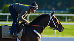 June 6, 2014: Commanding Curve exercises at Belmont Park as horses prepare for the Belmont Stakes in Elmont, New York. California Chrome and racing fans are awaiting his attempt to be the first Triple Crown winner in 36 years. Scott Serio/ESW/CSM
