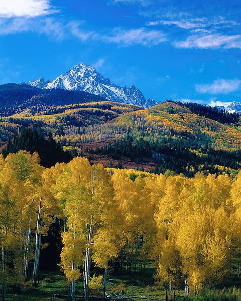 Autumn Aspen forest with Mount Sneffels behing,  San Juan Mountains, Telluride, Colorado, John offers autumn photo tours throughout Colorado.