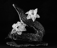 Still life with burned manzanita, withering daffodils, and scorched granite
