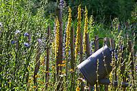 Unser Naturgarten in Hammer, Garten, insektenfreundlicher Garten, vogelfreundlicher Garten, blütenreich, Wildblumen, Wildblumengarten, Königskerze, Königskerzen, Schwarze Königskerze, Gartenzaun, Zaun, Staketenzaun, Stakettenzaun, Lattenzaun, Holzzaun, Rollzaun, garden fence, fence, hash mark, hashmark, batten fence, lattice fence, lattice fencing, paling fence
