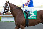 13 February 2010: Munnings after the Gulfstream Park Sprint Championship Stakes at Gulfstream Park in Hallandale Beach, FL.