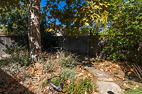 A giant sycamore dominates this back yard that's been planted with natives for more than 30 years.  The yard has a lush, foresty feel.