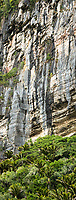 Limestone vertical cliffs of pancake rocks in contrast with Nikau Palms in Punakaiki, Paparoa National Park, Buller Region, West Coast, New Zealand, NZ