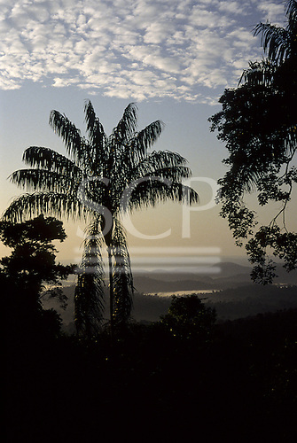 Para State, Brazil. View of misty rainforest at dawn with palm tree and other vegetation in silhouette; Amazon.