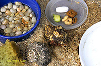 1Y48-006z  Land Hermit Crab - Sand Substrate, Food and Calcium, Fresh Water, Water Dish, Humidity Sponge, Extra Shells..