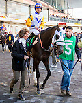 OZONE PARK, NY - NOVEMBER 26, 2016: Take of Silence #5 in the paddock for the Grade 2 Remsen Stakes for 2-year olds, at Aqueduct Racetrack . (Photo by Sue Kawczynski/Eclipse Sportswire/Getty Images)