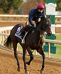 Lipizzaner, trained by trainer Aidan P. O'Brien, exercises in preparation for the Breeders' Cup Juvenile Turf Sprint at Keeneland Racetrack in Lexington, Kentucky on November 5, 2020.