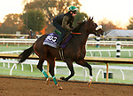 Bodenheimer, trained by trainer Valorie L. Lund, exercises in preparation for the Breeders' Cup Juvenile Turf Sprint at Keeneland Racetrack in Lexington, Kentucky on October 31, 2020.