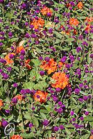 Color Theme Gardens Stock Photos
