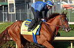 April 20, 2014 Chitu and exercise rider Georgie Alvarez gallop at Churchill Downs.  He is trained by Bob Baffert for owner Tanma Corporation. He won the Sunland Derby.