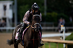 LOUISVILLE, KY - MAY 02: Midnight Bisou gallops in preparation for the Kentucky Oaks at Churchill Downs on May 2, 2018 in Louisville, Kentucky. (Photo by Alex Evers/Eclipse Sportswire/Getty Images)