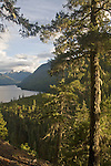 Little Beaver trail, North Cascades National Park, wilderness, Ross Lake National Recreation Area, Cascade Mountains, Washington State, Pacific Northwest, Old growth conifer forest,.