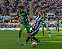 Jack Colback (right) of Newcastle United challenges Jack Cork of Swansea City during the Barclays Premier League match between Newcastle United and Swansea City played at St. James' Park, Newcastle upon Tyne, on the 16th April 2016