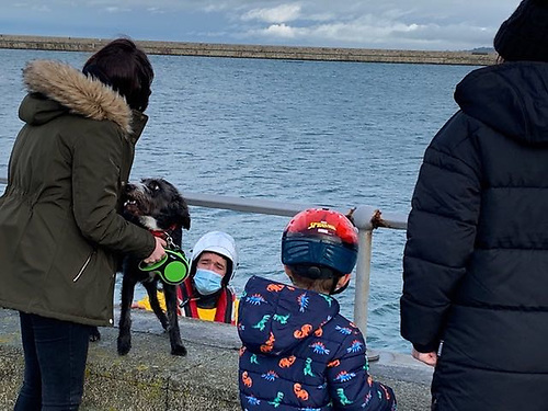 Dog rescued by Dun Laoghaire RNLI