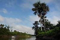 Buriti, Mauritia flexuosa.<br /> <br /> Igarapé Miri, Pará, Brasil<br /> Foto Paulo Santos<br /> 30/10/2008