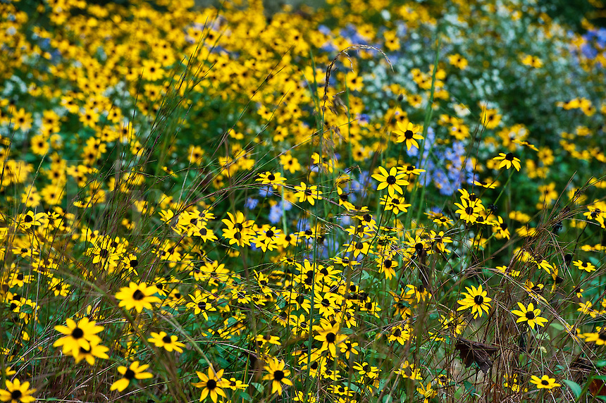 Meadow wildflowers,