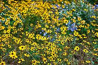 Meadow wildflowers,