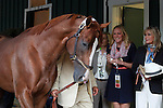 May 17, 2014. Back at the barn Saturday evening, California Chrome walks the shedrow after winning the 139th Preakness Stakes at Pimlico Race Course in Baltimore, MD. At far right is actress and California Horse Racing Board member Bo Derek. ©Joan Fairman Kanes/ESW/CSM