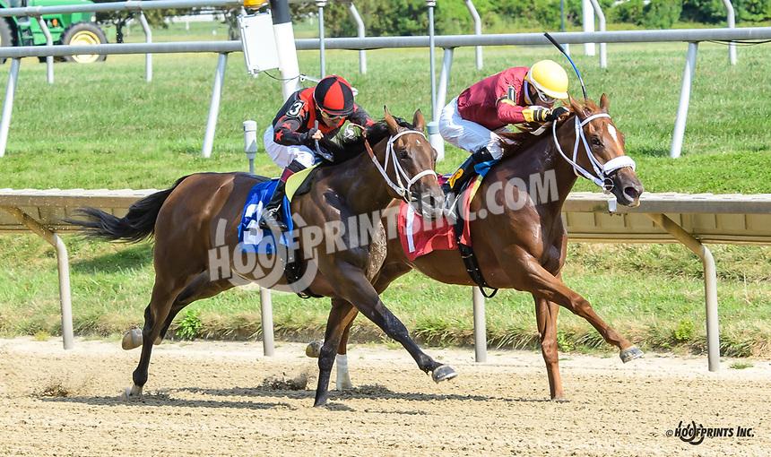 Triborough Girl winning at Delaware Park on 9/12/19