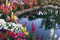 Flower garden at pond side. Palm Desert, California