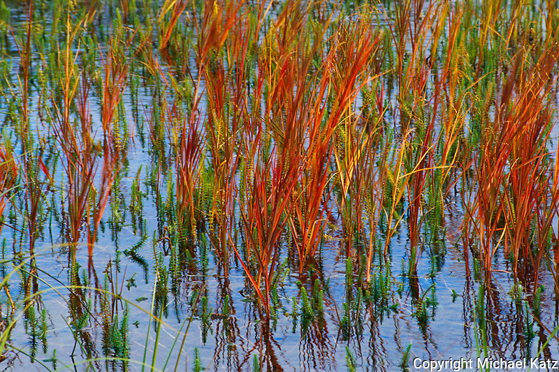 Reeds, Gates of the Arctic NP