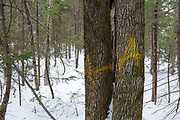Unit 48 of the Kanc 7 Timber harvest project along the Kancamagus Scenic Byway in the White Mountains of New Hampshire USA. The A painted on the trees is the marking symbol of the timber cruiser who worked the area. Its placed on a tree that was selected as a sample tree for the timber cruise of the sale.