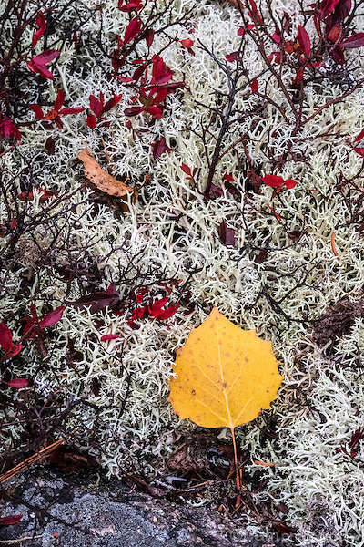 Single yellow leave on moss covered rock