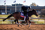 November 4, 2020: Sistercharlie, trained by trainer Chad C. Brown, exercises in preparation for the Breeders' Cup Filly & Mare Turf at Keeneland Racetrack in Lexington, Kentucky on November 4, 2020. Gabriella Audi/Eclipse Sportswire/Breeder's Cup/CSM